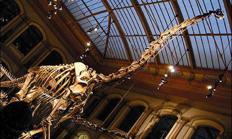 Σκελετοί δεινοσαύρων και μετεωρίτες δημοπρατούνται στη Γαλλία