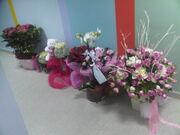 Ποιοι έκαναν δώρο λουλούδια στην Ελένη Μενεγάκη για τη γιορτή της;