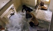 Video: Το trailer της Narnia