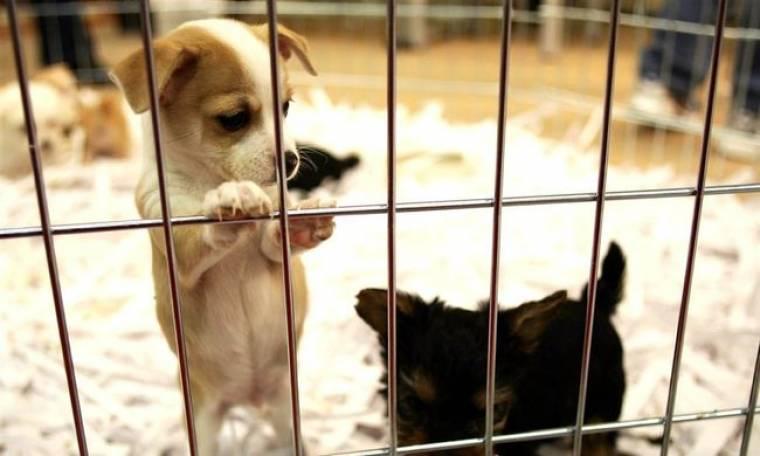 Αssociated Press: Στο διαδίκτυο τα ονόματα-βασανιστών ζώων