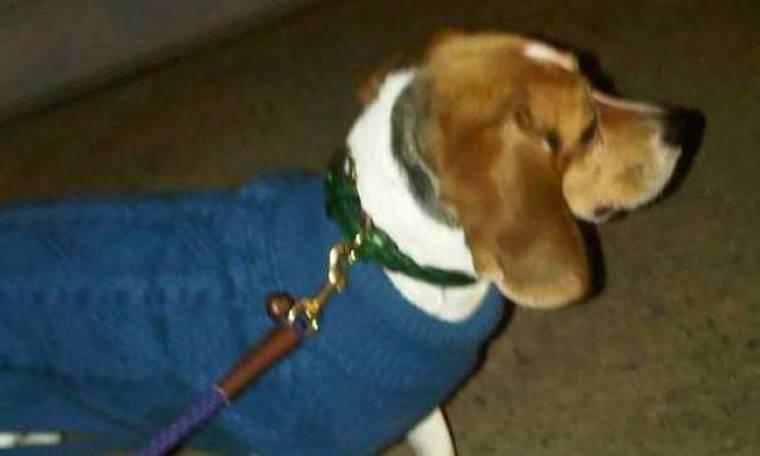 Σε ποιο It Girl ανήκει ο σκύλος; (Αποκλειστικά στο gossip-tv και στο cosmopoliti blog)