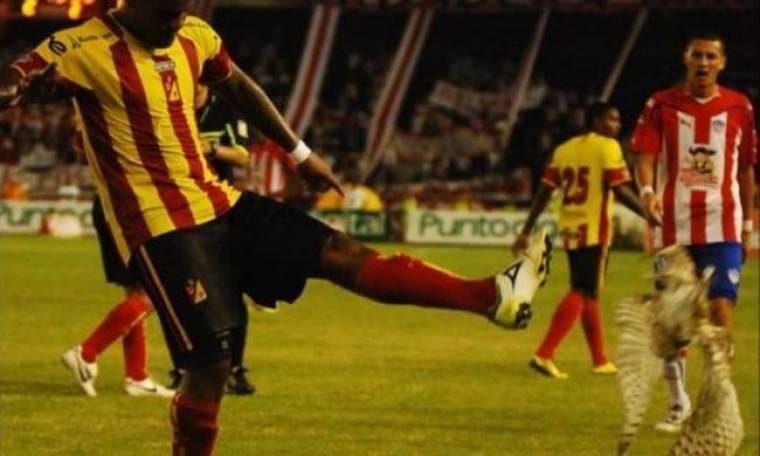 Video: Ποδοσφαιριστής κλώτσησε κουκουβάγια