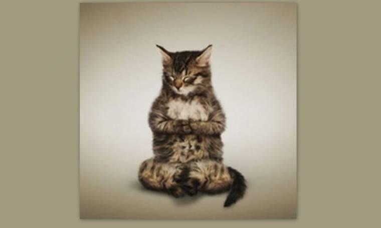 Νιομμμμμ.. Κάνουν οι γάτες γιόγκα; Κάνουν!