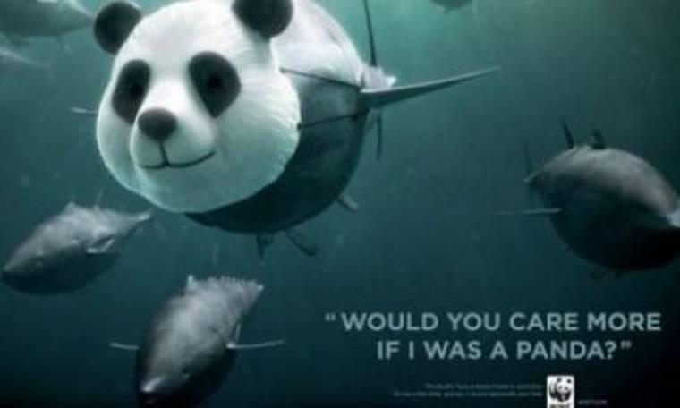 «Θα ενδιαφερόσουν περισσότερο αν ήμουν ένα πάντα;» είπε το ψάρι
