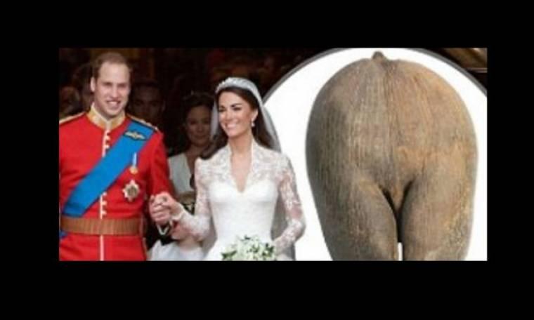 Καρύδα για... τεκνοποίηση το γαμήλιο δώρο William – Catherine