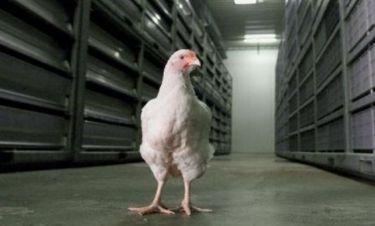 Κίνα: Νεκρός 39χρονος από τη γρίπη των πτηνών