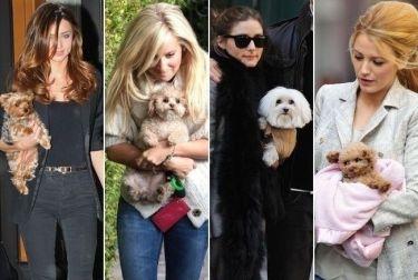 Οι σταρ με τα σκυλάκια τους! (φωτό)