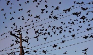 Η αστρολογική ανατομία ενός θρίλερ - Τα «Πουλιά» του Χίτσκοκ