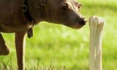 VIDEO: Φάρσα σε σκύλο έχεις δει; Να η ευκαιρία!