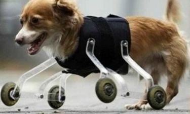 Φωτογραφία – μάθημα ζωής ανάπηρου σκύλου κάνει το γύρο του Facebook