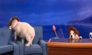 VIDEO: Σκυλάκια πήραν την θέση των παρουσιαστών!