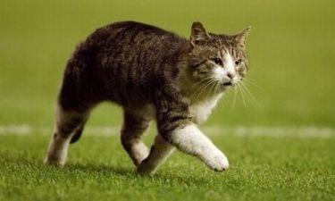 Εξαφανίστηκε ο γάτος της Λίβερπουλ
