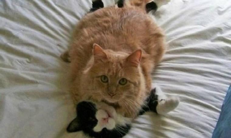 Φωτογραφίες με γάτες την πιο κατάλληλη στιγμή (pics)