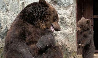 Μαμά μαλώνει το αρκουδάκι της και στη συνέχεια το αγκαλιάζει! (pics)