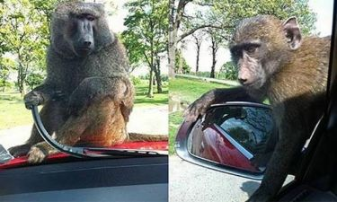 Ο Ρούνεϊ θύμα κλοπής από… μαϊμού