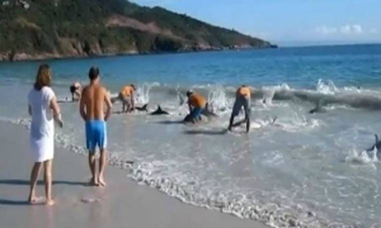 VIDEO: Δείτε πως οι λουόμενοι μιας παραλίας έσωσαν 30 δελφίνια!
