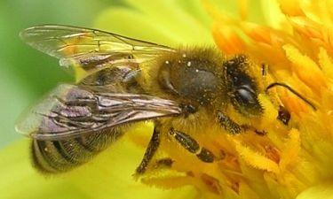Διακοπή αγώνα λόγω μιας... μέλισσας!
