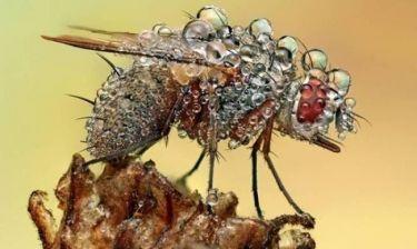 Τα βρεγμένα… έντομα