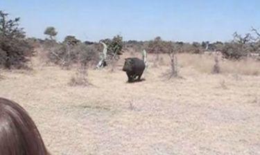 VIDEO: Ιπποπόταμος επιτίθεται σε τουρίστες που κάνουν σαφάρι!