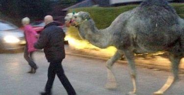 Μια καμήλα στα γενέθλια της συζύγου του Ρούνεϊ!