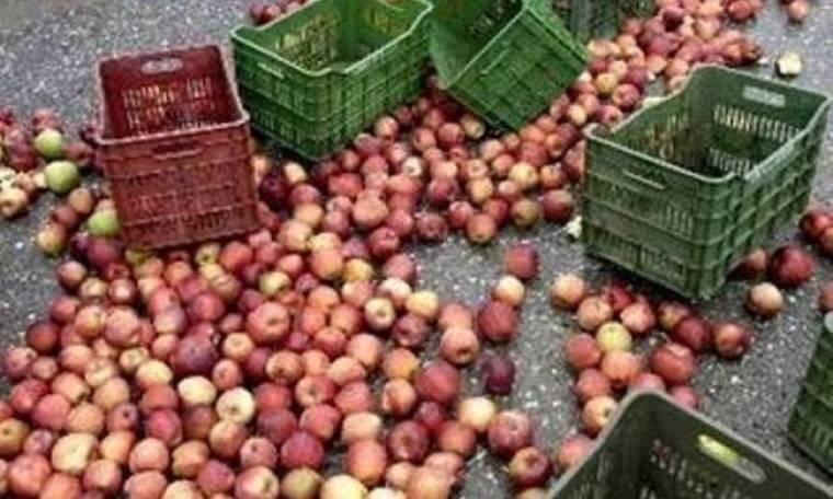 Οι μηλοπαραγωγοί ενισχύονται οικονομικά