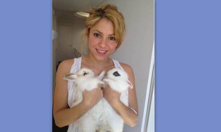 Η Shakira έγινε κουνελομάνα!