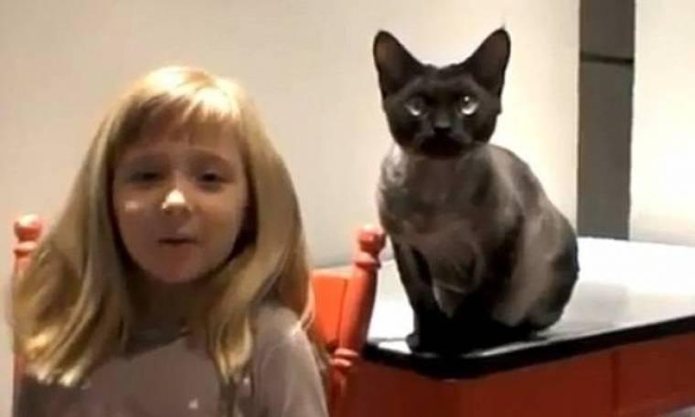 Βίντεο: Επικίνδυνες αποστολές για... γάτες