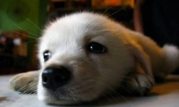 Κλήση θα παίρνουν οι «ταραξίες» σκύλοι στη Χαβάη