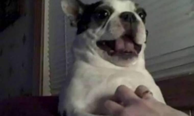 ΒΙΝΤΕΟ: Αγαπημένο παιχνίδι ενός σκύλου... το γαργάλημα!