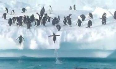 VIDEO: Θεαματικά άλματα πιγκουίνων σε παγόβουνο!