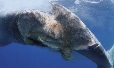 Πλοίο χτυπά φάλαινα την ώρα που κοιμάται (φωτο)