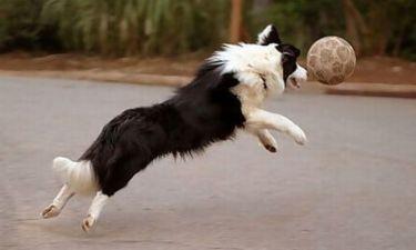 Η Πάρμα υιοθέτησε σκύλο-γουρλή!