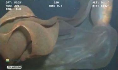 Νέα γιγαντιαίο θαλάσσιο είδος ανακαλύφθηκε στα βάθη του ωκεανού (VIDEO)