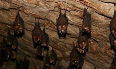 Περού: Επτά παιδιά νεκρά εξαιτίας δαγκωμάτων από νυχτερίδες