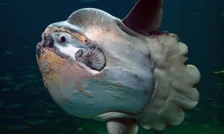 Το πιο βαρύ ψάρι στον κόσμο (Pics)