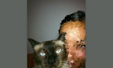 Σε ποια ηθοποιό ανήκει ο χαριτωμένος γάτος;
