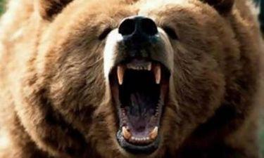 Έχει αρκούδα για κατοικίδιο! (pics)