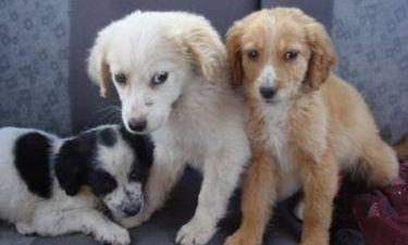 ΣΟΚ! Συνεχίζεται το εμπόριο σκύλων από ασιάτες στην Αθήνα!