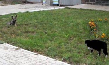 Video: Επική μονομαχία σκύλου και γάτας
