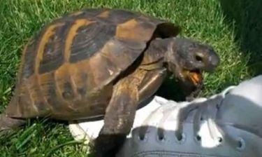 Ξεκαρδιστικό: Χελώνα κάνει σεξ με ένα παπούτσι!