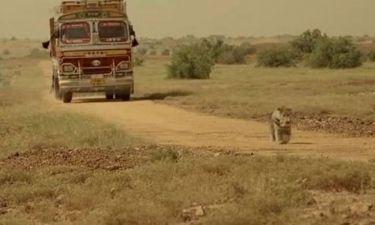 Ο σκύλος, η τύχη, η αφοσίωση και η προδοσία (video)