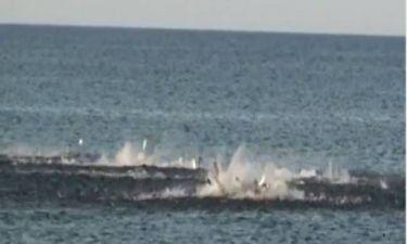 Video: Καρχαρίες επιτίθενται σε κοπάδι ψαριών κοντά σε παραλία