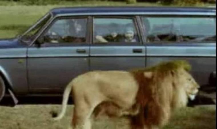 Παρέα με τον… lion king (video)