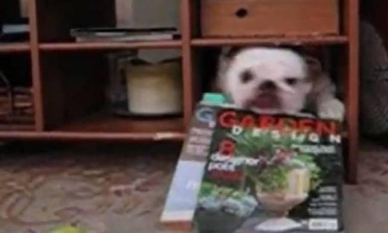 Video: Ο χοντρός σκύλος κόλλησε στην τρύπα