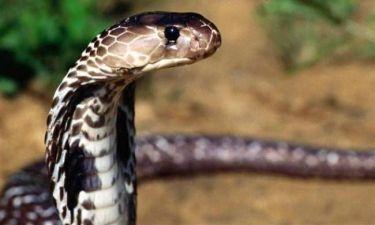 Αγρότης σκότωσε φίδι με... δαγκωνιά!