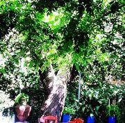 Ελένη Μενεγάκη: Δείτε τις φωτογραφίες που ανεβάζει, κάνοντας διακοπές