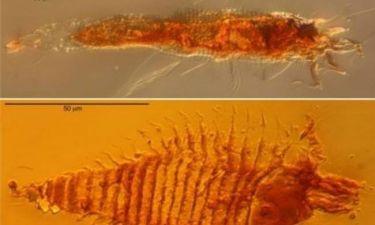 Βρέθηκαν διατηρημένα έντομα ηλικίας 230 εκατ. ετών!