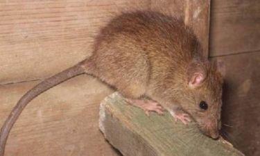 Ποντίκια έφαγαν το άψυχο σώμα ενός βρέφους!