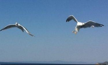 Τα… πουλιά του Νίκου Παπαδάκη