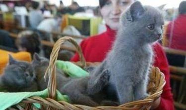 Το γατάκι του Πούτιν θα ζήσει έξι μήνες στο αεροδρόμιο του Τόκιο